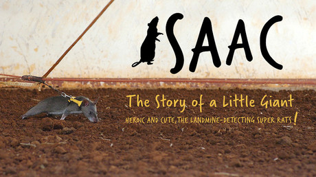 Isaac. The story of a little giant