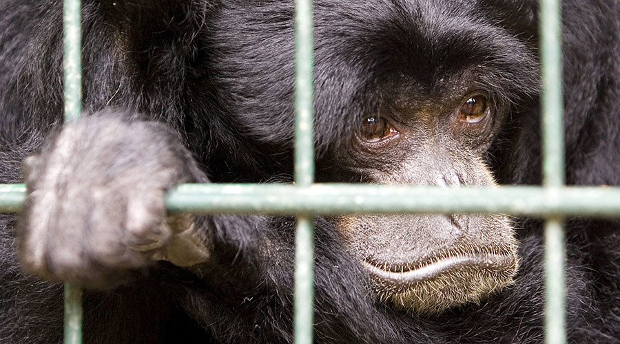 Zoo owner says he's the best... despite death of 500 animals