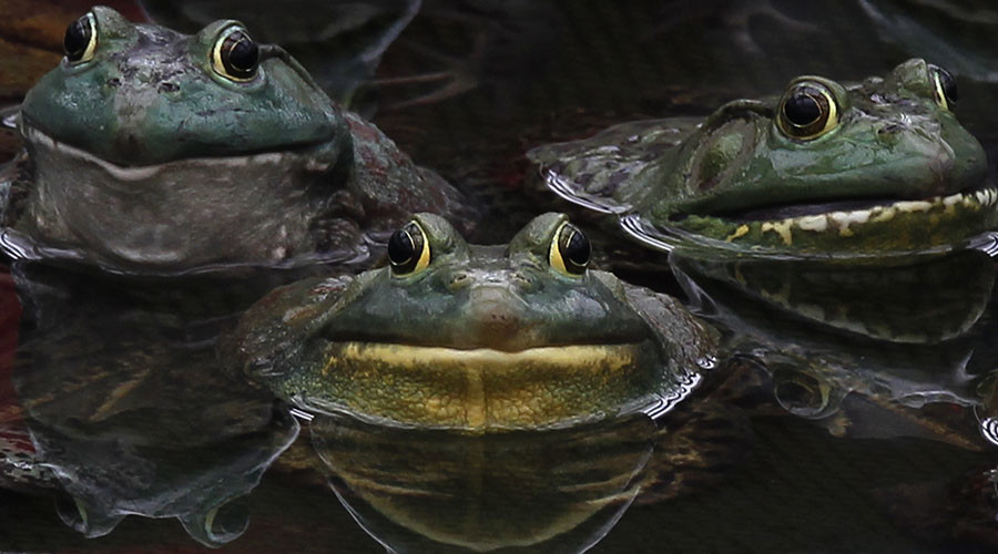 Pennsylvania road closes early for lovesick amphibians