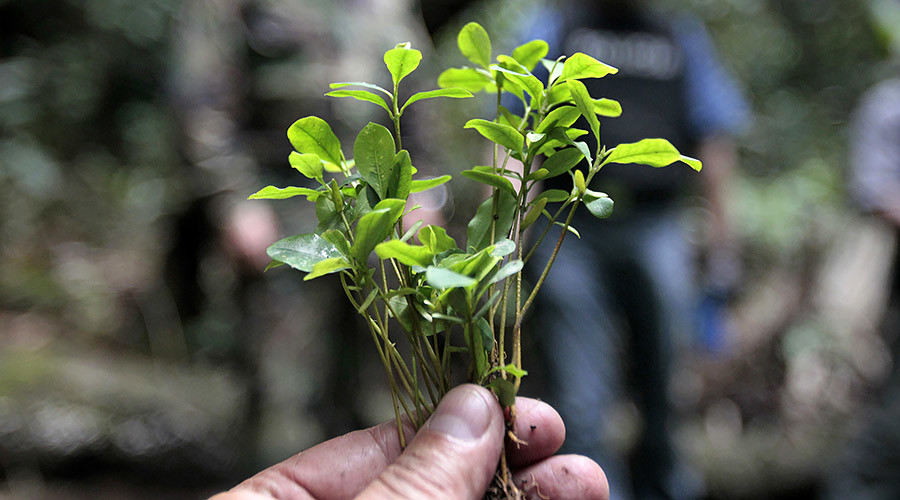 'Historic day': Bolivia doubles coca cultivation land, burying law against 'demonized' plant
