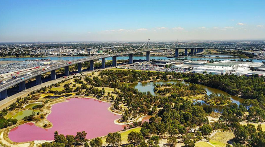 A salt on the senses: Vibrant pink lake sends Melbourne shutterbugs into frenzy (PHOTOS)