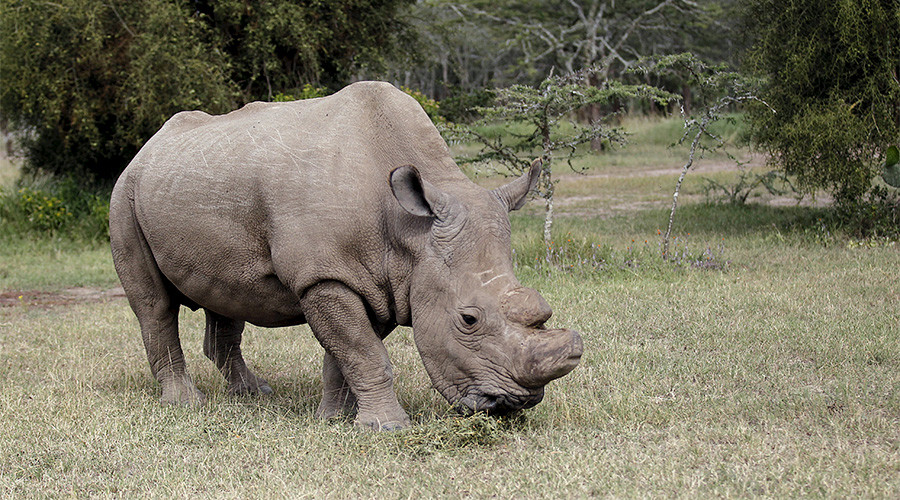 Horny beast joins Tinder to raise awareness for ailing white rhino population