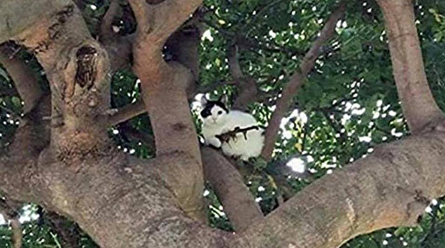 Feline fatale: Police alerted to cat in tree 'armed with gun'