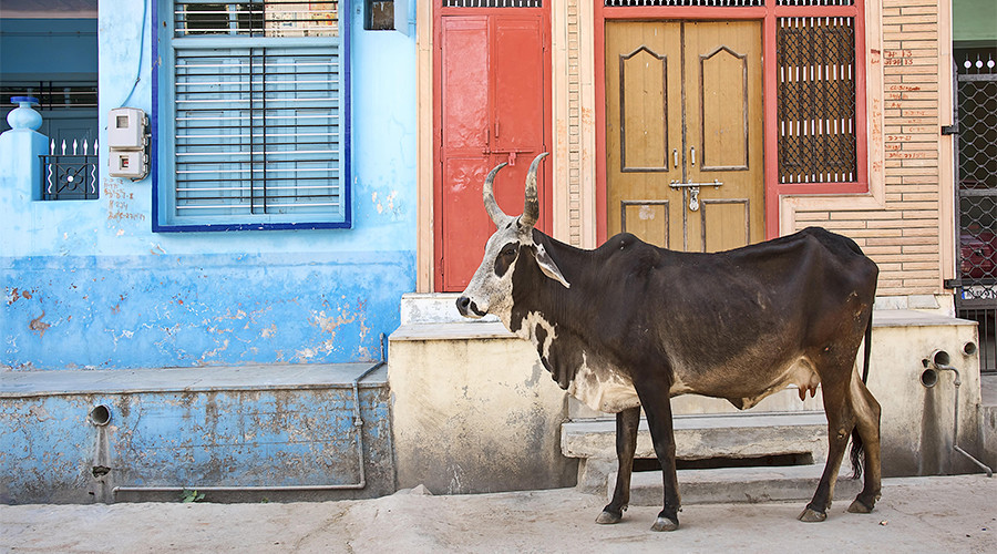 India should prosecute 'cow vigilantes' for brutal attacks on Muslims & 'untouchables' – HRW