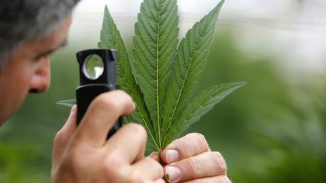 Big Pharma's War on Marijuana & Closing Rikers Island