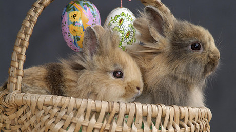 Foster parents say children were removed because they wouldn't say the Easter Bunny is real © Reinhard Hölzl / Global Look Press