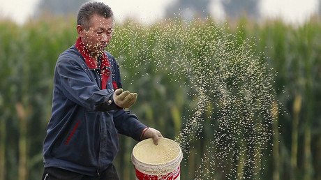 A farmer plants seeds in a corn field at a farm in Gaocheng, Hebei province, China © Kim Kyung-Hoon
