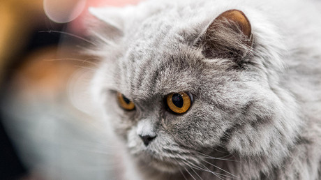 California cat killer sentenced to 16 years in prison for 21 feline deaths