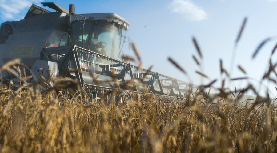 Russia to resume wheat exports to Turkey, Ankara told to keep tomatoes