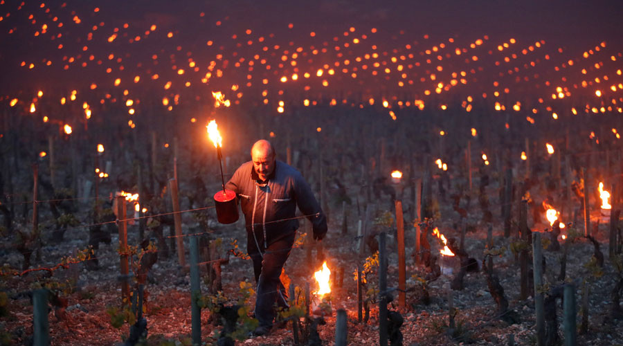 Vineyards in France suffer biggest loss in decades