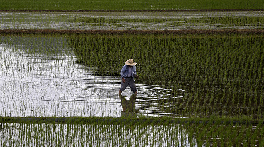 Fukushima village farmers plant rice for 1st time since nuclear disaster