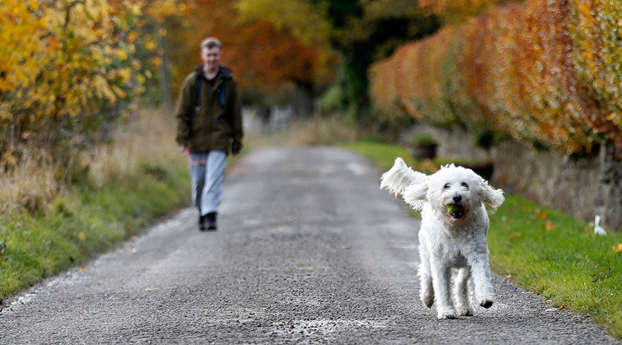 Barking mad? Dogs can 'talk' to humans – study