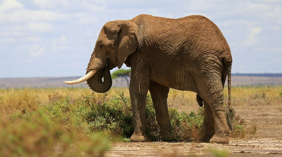 Professional hunter crushed to death by falling elephant