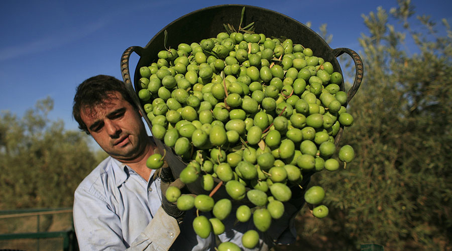 Mediterranean drought leads to spike in olive oil prices