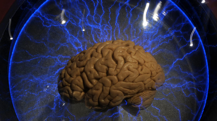 Scientists discover intelligence linked to 52 'smart genes'