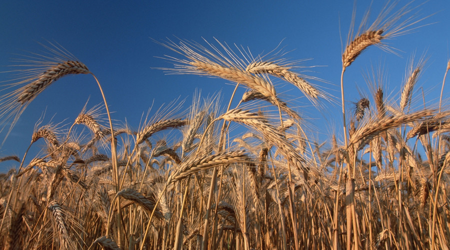 Turkey imposes new restrictions on Russian wheat imports