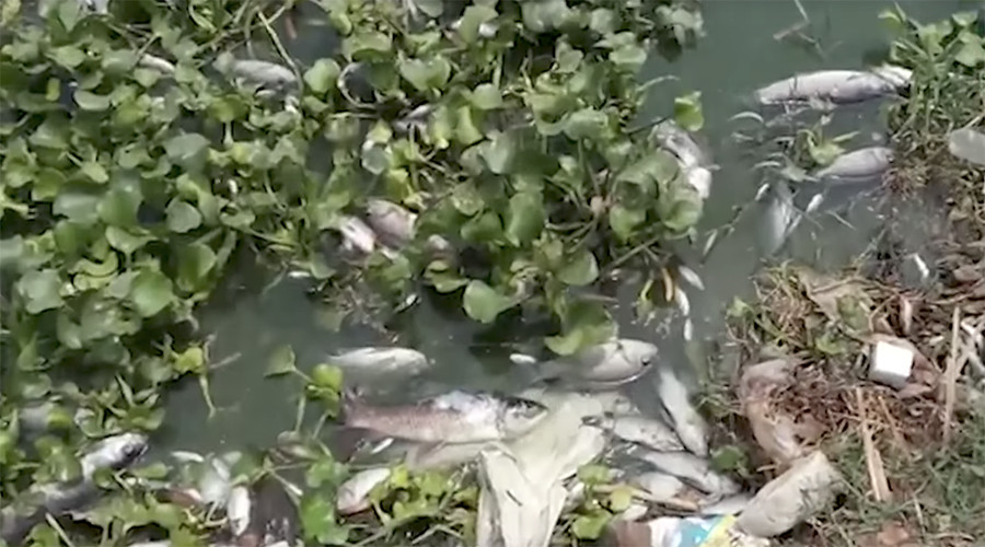 Mystery surrounds death of 30,000 fish at Indian lake (VIDEO)