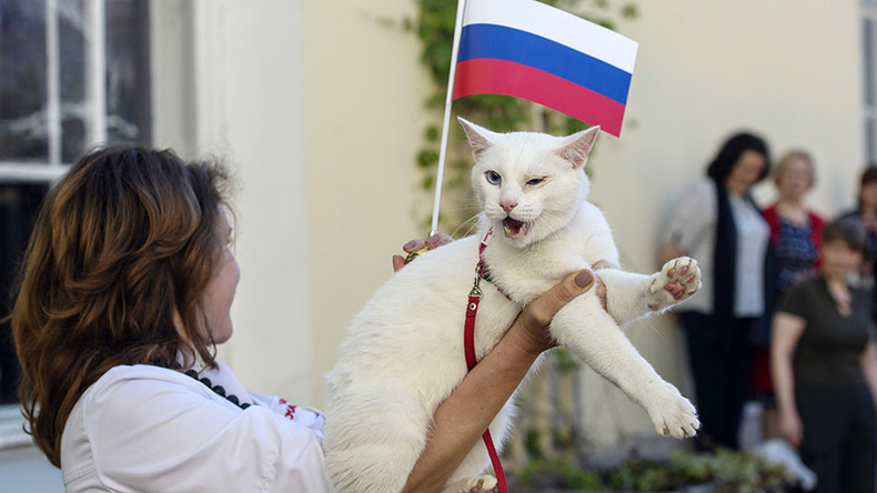 Confed Cup oracle cat forecasts Russian win in game with Kiwis (VIDEO)