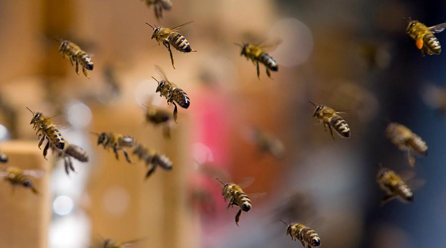 Swarm of bees shuts down New York midtown street