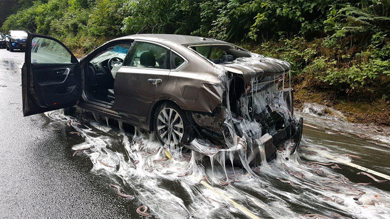 Eels on wheels: Oregon highway & cars get slimed after 4 tons of eels spill out of truck