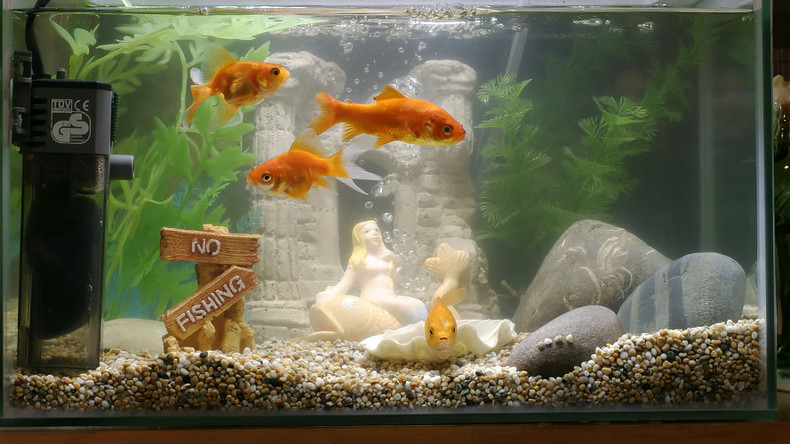 Smart fish tank exposes casino to hackers rt viral for Smart fish tank