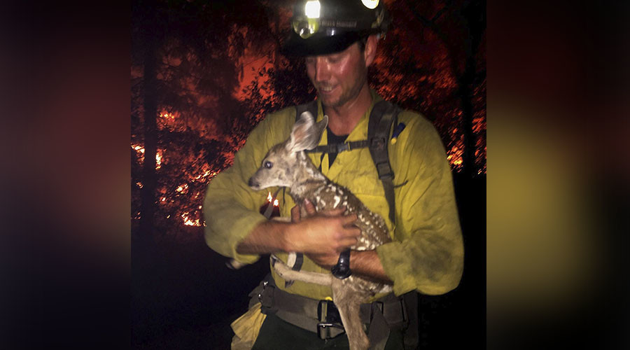 Wildfire rescue: Firefighters save baby deer from certain death (VIDEOS, PHOTOS)