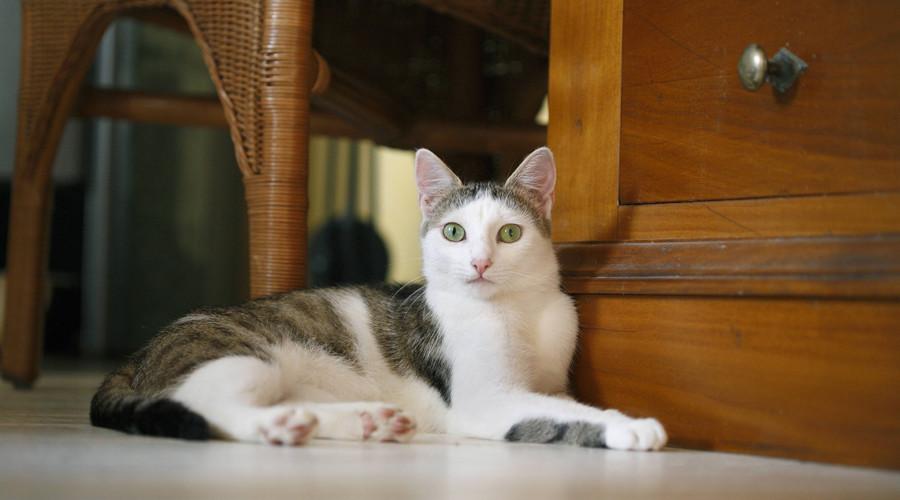 California cat killer sentenced to 16 years in prison for 21 feline deaths