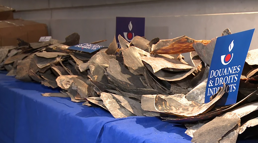Half a ton of endangered tortoiseshell intercepted by French customs