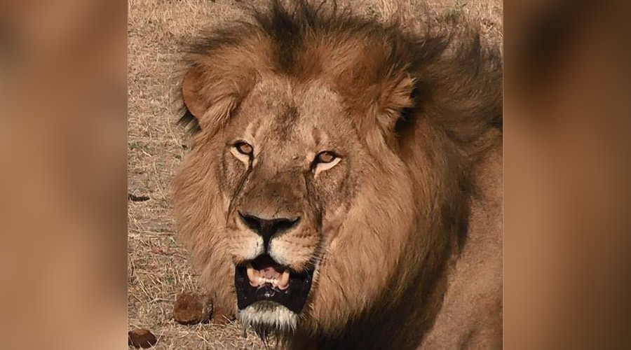 Son of Cecil the lion killed by trophy hunter in Zimbabwe