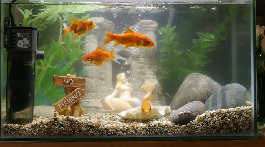 Smart fish tank exposes casino to hackers