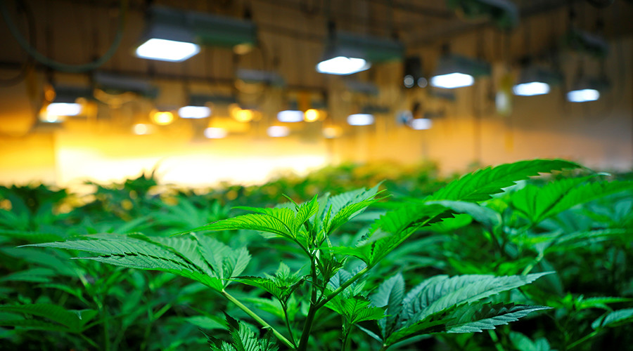 UK's largest cannabis-growing operation busted
