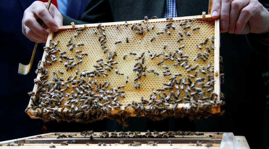 Buzz off! Antisocial bees share genetic profile with autistic people, study says