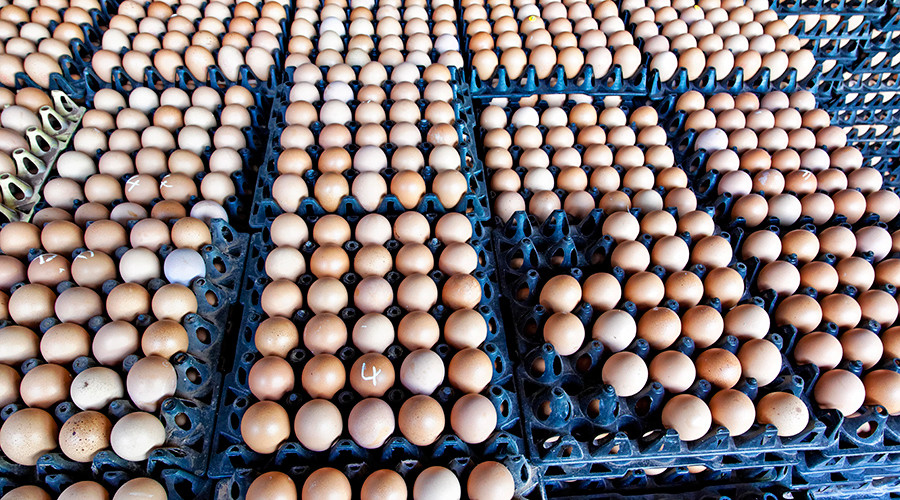 Belgium admits it knew about insecticide-contaminated Dutch eggs back in June