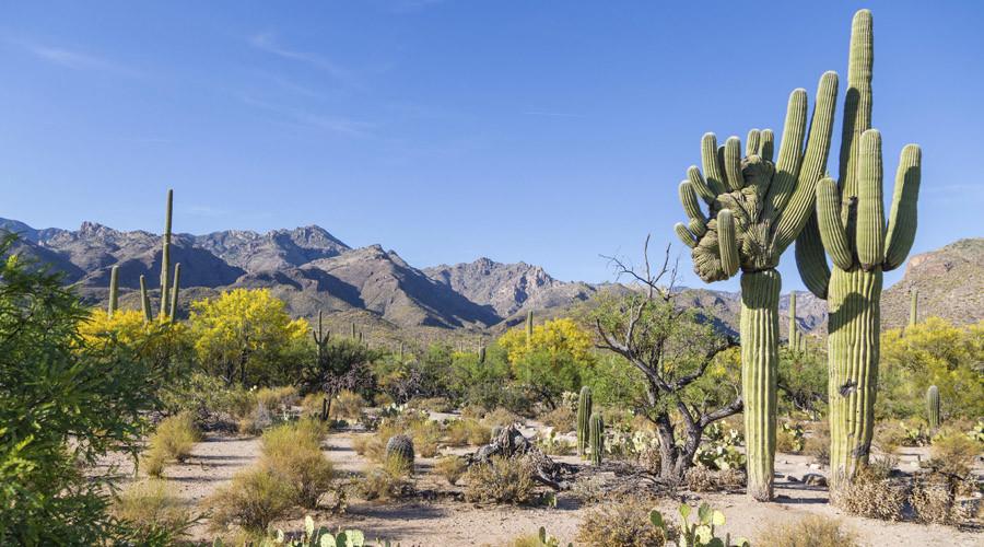 Man survives on urine, beer & crackers for 2 days in Arizona desert (PHOTOS)