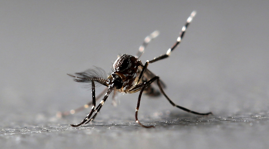 Twitter bites back: Mosquito killer banned for posting bloody death pic