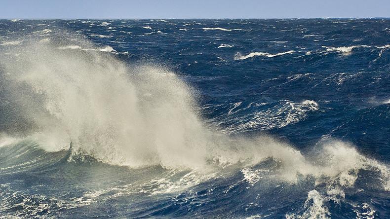 Mysterious Hurricane Harvey 'sea monster' finally identified (PHOTOS)