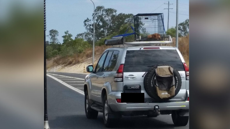 Puppy Strapped To Car Roof In Scorching Heat As Driver