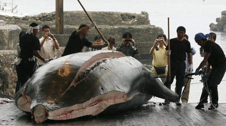 Japan slaughters 177 whales as part of annual hunt