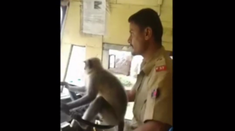 Monkey bus-ness: Driver in India suspended after letting animal behind the wheel (VIDEO)