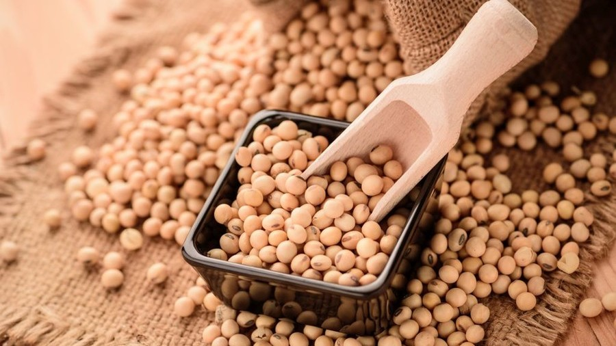 Russia to replace US soybean exports to China amid escalating trade war
