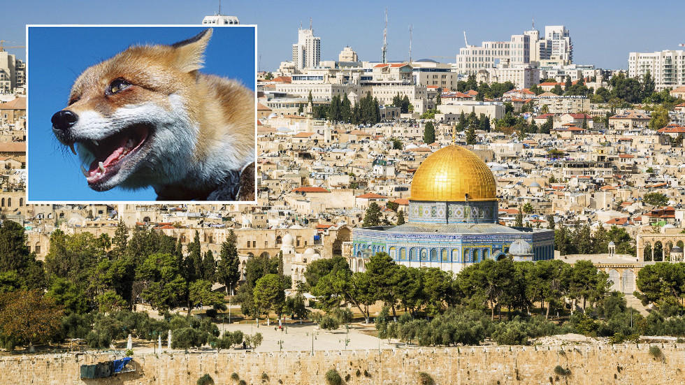Jew Detector: Jews Call For 3rd Temple As A Bunch Of Foxes Full Fill
