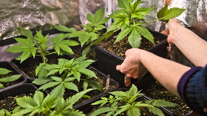 Colorado veteran faces jail after using marijuana to treat PTSD