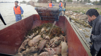 A photo taken through the window on a boat shows dead pigs collected by sanitation workers from Shanghai's main waterway on March 11, 2013. (AFP Photo/Peter Parks)
