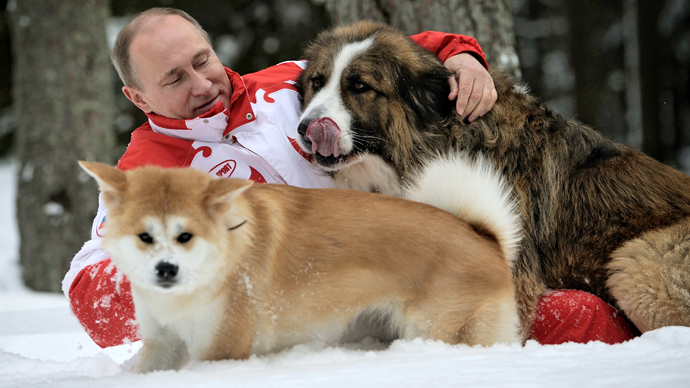 President Vladimir Putin and his dogs, Buffy the Bulgarian Shepherd and Yume the Akita-Inu, walk in the Moscow Region (RIA Novosti / Alexsey Druginyn)