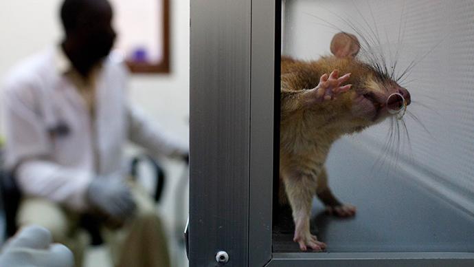 Bioengineering breakthrough? US researchers successfully implant lab-grown rat kidney