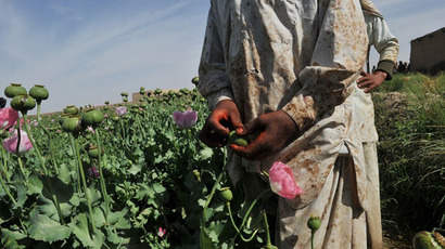 Afgan opium poppy farmers score opium poppies. (AFP Photo / Bay Ismoyo)