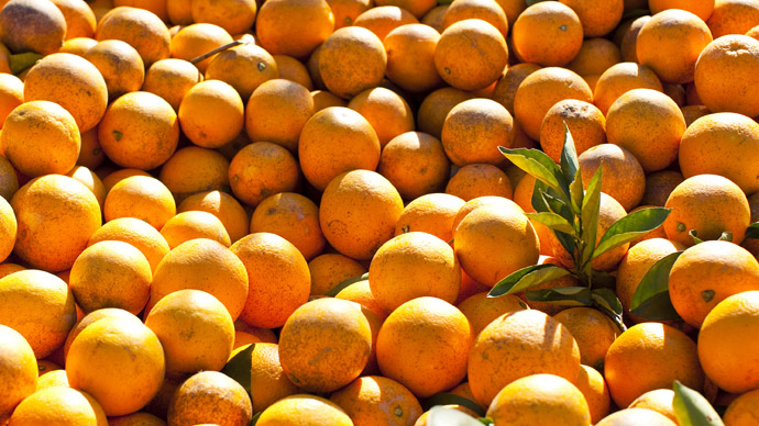 Florida scientifically engineers insects to fight incurable citrus disease
