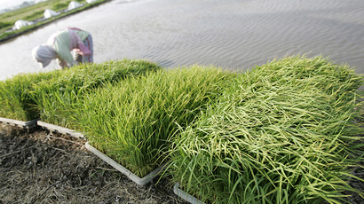 A farmer prepares to plant rice in Takashima, Japan. (Reuters / Yuriko Nakao)