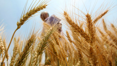 Discovery of Monsanto GMO wheat threatens US exports