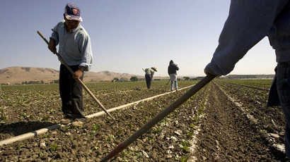 Workers tend to a field at a Earthbound Organic Farm in San Juan Bautista, California. (AFP Photo / David Paul Morris)